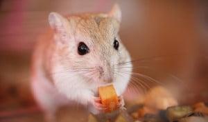 Soñar con un ratón