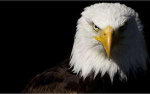 soñar con águilas
