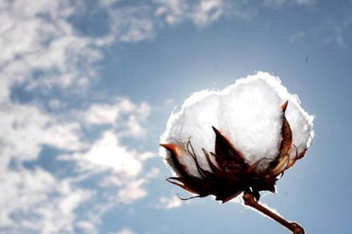 soñar con algodón