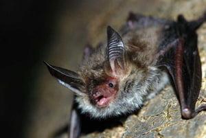 soñar con murciélagos