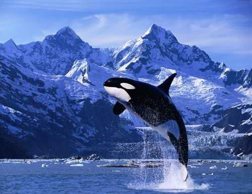 Ver orcas en los sueños