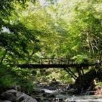 【大自然満喫!】道志の森キャンプ場の口コミや評判は?