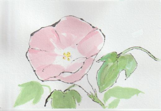 朝顔の絵手紙-9