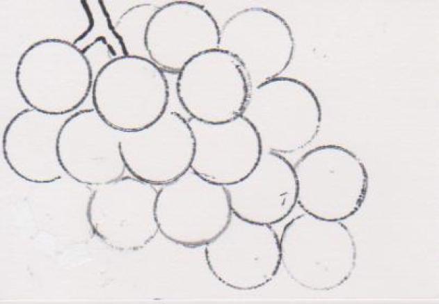 ブドウの絵2ーフイルムキャップで。