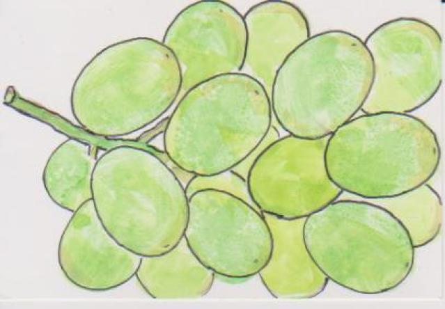 細長いブドウの絵ー13