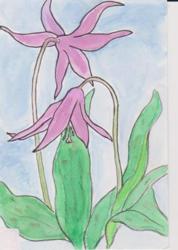 カタクリの花の絵ー3
