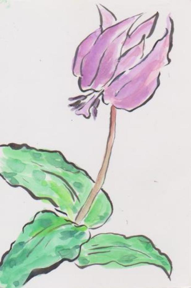 カタクリの花の絵ー2