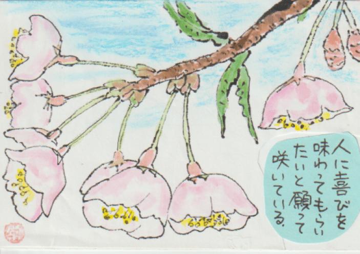 桜の絵手紙作品ー2