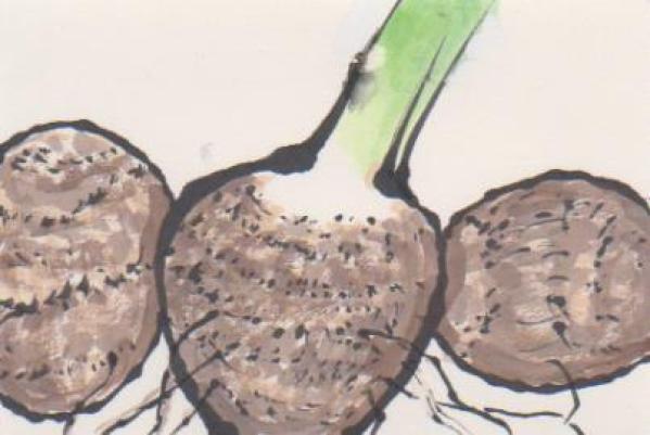 里芋の絵3