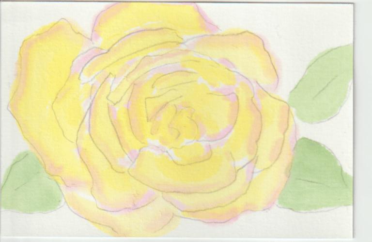黄色のバラの絵手紙ー1下絵