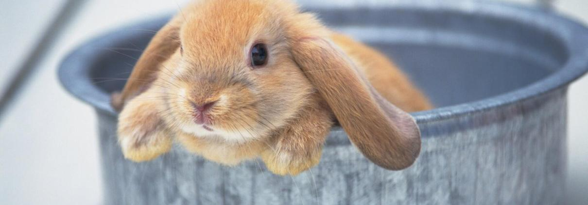 Expresión en francés poser un lapin