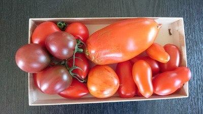 tomato2016-1