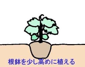 tesyoku (2)