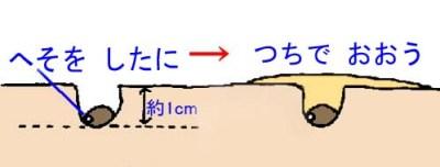 tanemaki (3)