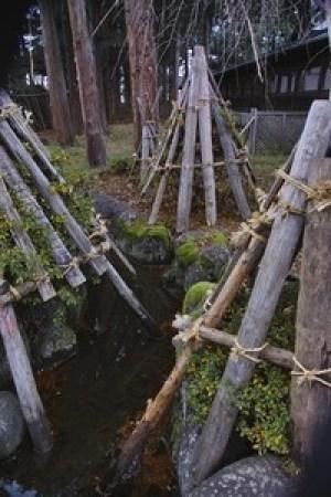 yukigakoi (2)