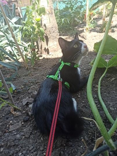 Voyager avec ses chats