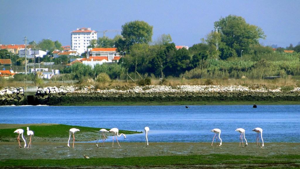 Zwiedzanie ciekawych miejsc w Aveiro - flamingi