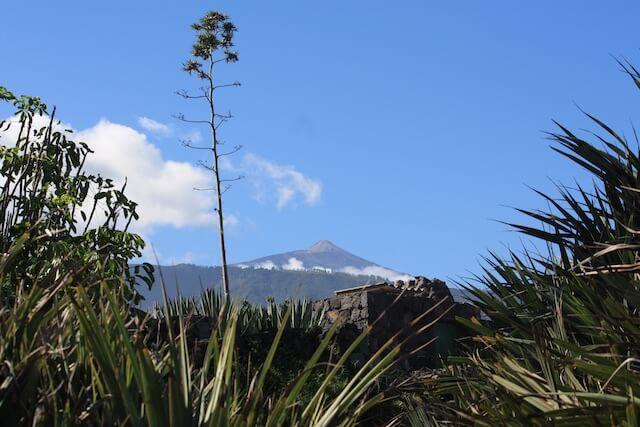 Teneriffa Teide gruen (1)