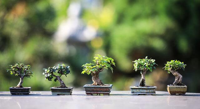 家でできる盆栽
