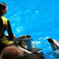 しながわ水族館の人気者たちと出会う!水族館とコラボのイベントもチェック!
