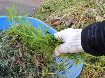 太宰府市 一軒家 庭の草引き|えびす造園