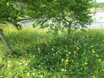春日市 一軒家 庭の草引き|えびす造園