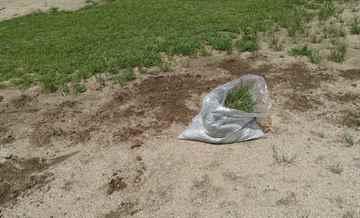 福岡市城南区 一軒家 庭の草抜き|えびす造園