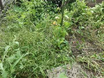 粕屋町 一軒家 庭の草取り|えびす造園