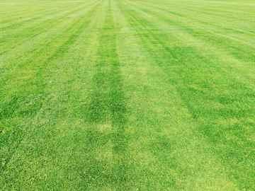 宇美町 一軒家 庭の芝の手入れ|えびす造園