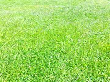 古賀市 一軒家 庭の芝の手入れ|えびす造園