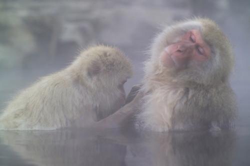 埼玉の日帰り温泉おすすめランキング