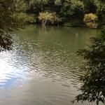福岡市の野池情報!4