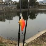 福岡市バスフィールドレポート|某野池30