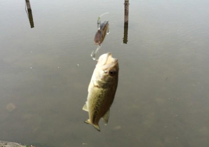150405西の堤池6