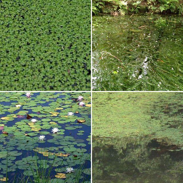福岡市近郊でこのようなカバー池をご存知の方DMにて教えて頂けないでしょうか… よろしくお願い致します。#外来魚駆除反対