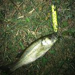 Keybow ブラブラバージョンも面白いっす考えた方ありがとうございます。#wildlures#Keybow#外来魚駆除反対