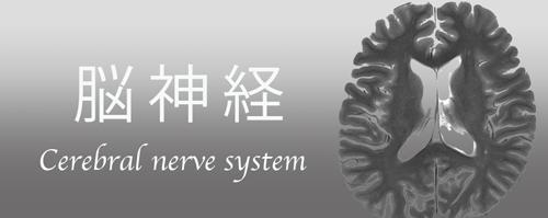 cerebral-nerve-system
