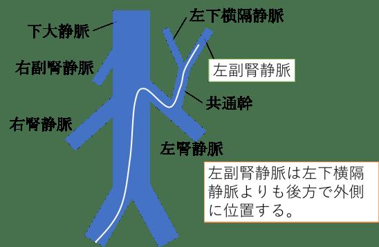 anatomy of left adrenal vein1