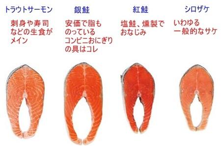 鮭・サーモン・鱒見た目の違い