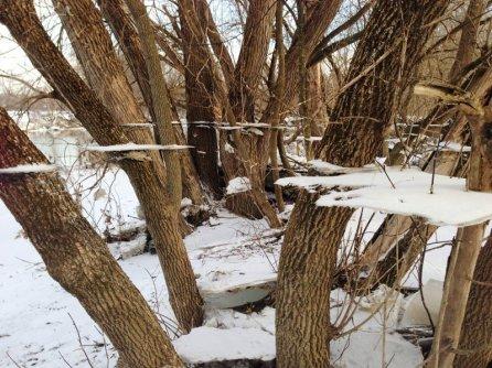 hielo produce un efecto mágico en los árboles