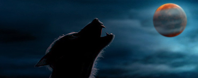 puma-lobo-luna-de-sangre