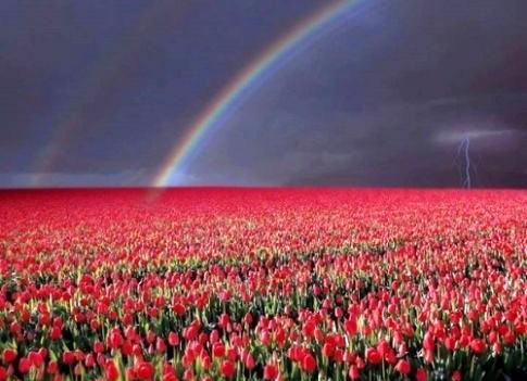 de arcoíris, rayos y tulipanes