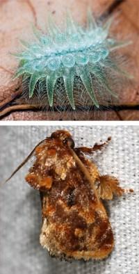 naturaleza-oruga-mariposa-mutante-10