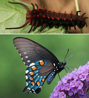 naturaleza-oruga-mariposa-mutante-2