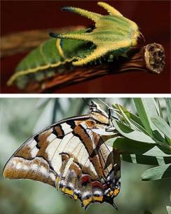 naturaleza-oruga-mariposa-mutante-4