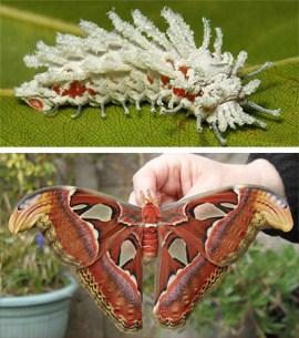 naturaleza-oruga-mariposa-mutante-5