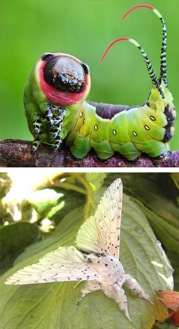 naturaleza-oruga-mariposa-mutante-7