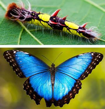 naturaleza-oruga-mariposa-mutante-9