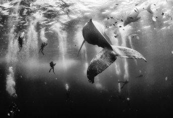 Ballena madre e hija nadan junto a sus improvisados acompañantes