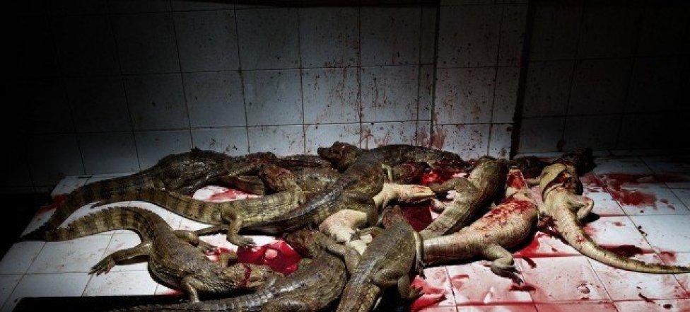 """""""El salón del sacrificio"""" es el nombre que recibe esta habitación en el matadero de caimanes, en Colombia."""